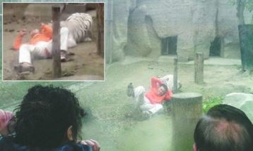 Man jumps in front of Bengal tigers in a China zoo