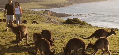 KANGAROO ISLAND: A 4-DAY ITINERARY